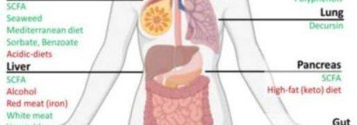 Paras mahdollinen hyöty terveellisestä ruoasta syöpäpotilaalle